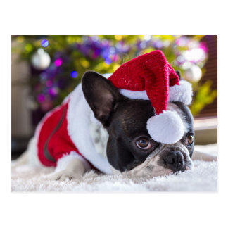 Französische Bulldogge in der Weihnachtsmannmütze Postkarte