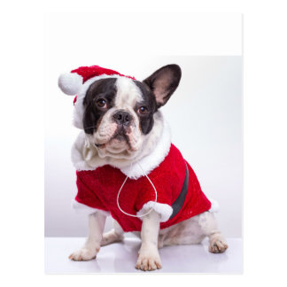 Französische Bulldogge in Sankt-Kostüm für Postkarte