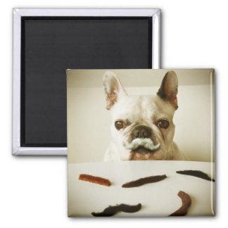 Französische Bulldogge mit einem Schnurrbart Quadratischer Magnet