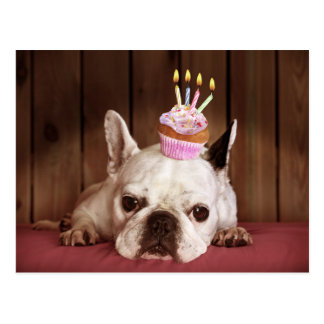 Französische Bulldogge mit Geburtstags-kleinem Postkarte