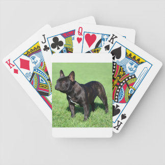 Französische Bulldogge Poker Karten