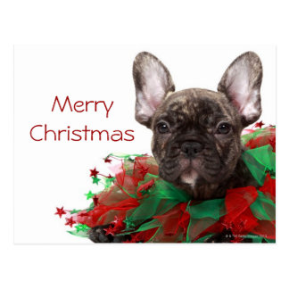 Französische Bulldogge tragender Weihnachtskragen Postkarte