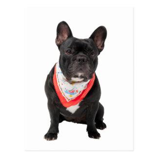 Französische Bulldogge verfolgen niedliches schön