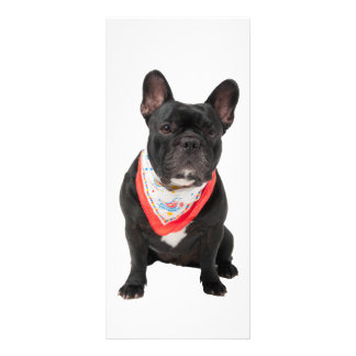Französische Bulldogge, verfolgen niedliches Werbekarte