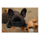 Französische Bulldoggen Poster