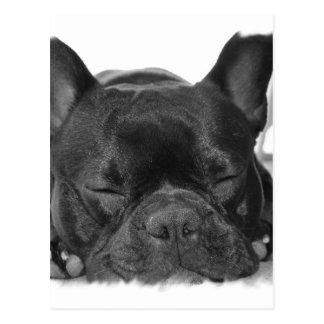 Französische Bulldoggen-Postkarte Postkarte