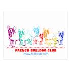 Französische Bulldoggen-Postkarten Postkarte