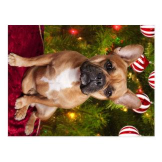 Französische Bulldoggen-Weihnachtspostkarte Postkarte
