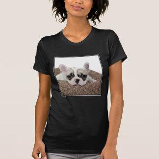 Französische Bulldoggen-Welpe, der in einem T-Shirt