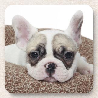 Französische Bulldoggen-Welpe, der in einem Untersetzer