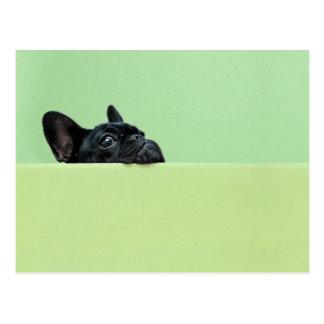 Französische Bulldoggen-Welpe, der über Wand Postkarte