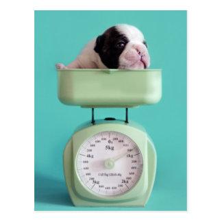 Französische Bulldoggen-Welpe Postkarte