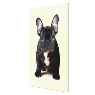 Französische Bulldoggen-Welpen-Sitzen Leinwanddruck