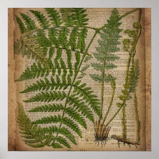 französischer botanischer Druckfarn des Waldlaubs Poster