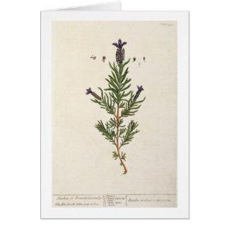 Französischer Lavendel, überziehen 241 von 'einem Karte