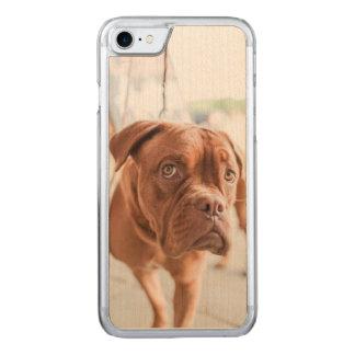 Französischer Mastiff Carved iPhone 8/7 Hülle