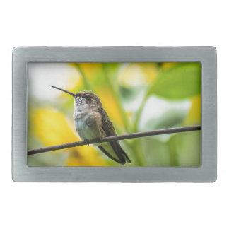 Frau Breit-angebundener Kolibri mit Sonnenblumen Rechteckige Gürtelschnalle