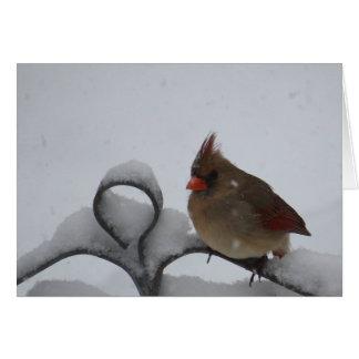 Frau Cardinal Notecard - löschen Sie nach innen Karte