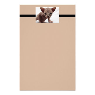 Freaky niedliches Furless Sphynx Kätzchen Briefpapier