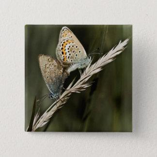 freche Schmetterlinge Quadratischer Button 5,1 Cm