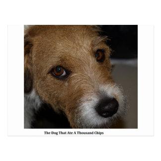 Frecher Hund aß die Chips, die schlechter Hund den Postkarte
