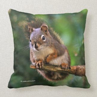 Freches rotes Eichhörnchen in der Tanne Kissen