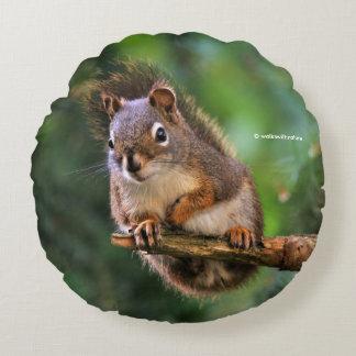 Freches rotes Eichhörnchen in der Tanne Rundes Kissen