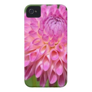 Freigebiges rosa Dahlie-und Knospen-Plakat iPhone 4 Case-Mate Hülle