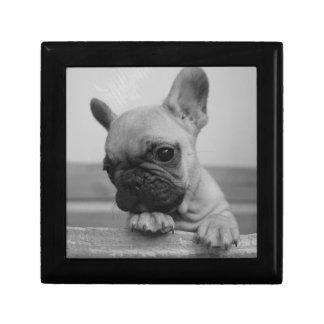 Frenchie puppy erinnerungskiste