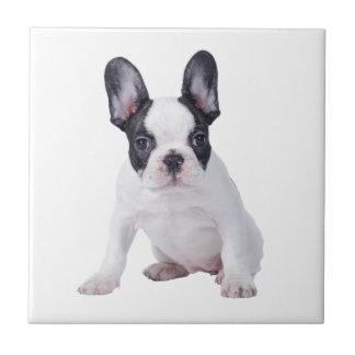 Frenchie - Welpe der französischen Bulldogge Keramikfliese