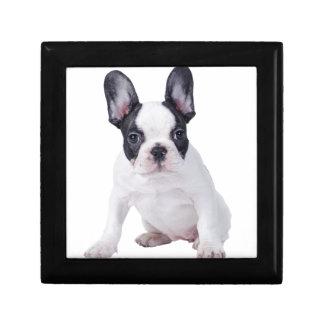 Frenchie - Welpe der französischen Bulldogge Schmuckschachtel