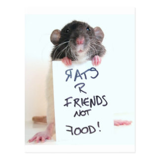 Freund-nicht Nahrung 2 der Ratten-R Postkarte