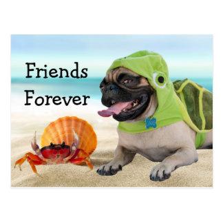 Freunde für immer: Krabbe + Schildkröte-Mops Postkarte