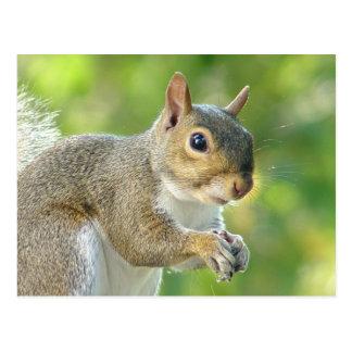 Freundliche kleine Eichhörnchen-Postkarte Postkarte