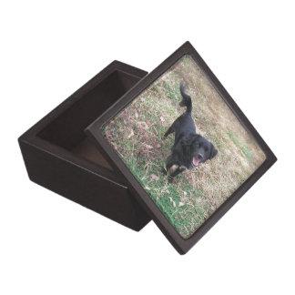 Freundliche schwarze Labrador-Pose Schmuckkiste