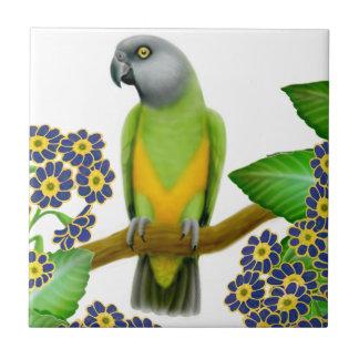 Freundliche Senegal-Papageien-Fliese Kleine Quadratische Fliese