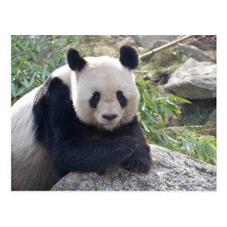 Freundlicher großer Panda Postkarte