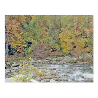 Friedlicher Bereich mitten in dem Holz Postkarte