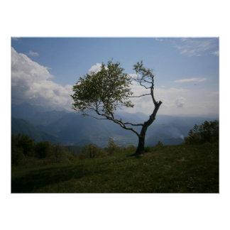 Friedliches Baum-Plakat Poster