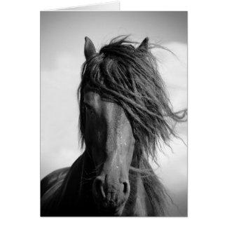 Friesischer Stallion im Wind Karte