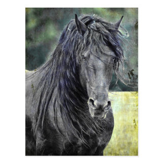 Friesischer Stallion Postkarte