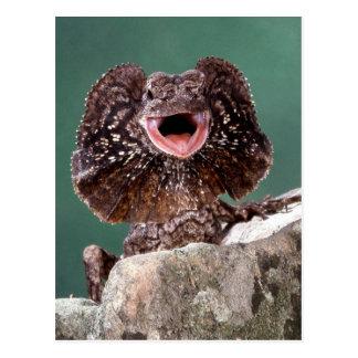 Frilled Eidechse Postkarte