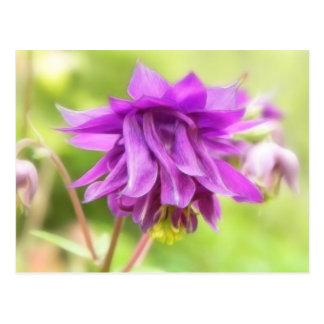 Frilly lila Aquilegia (Columbine) Postkarte