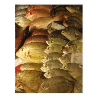 Frische Fische Postkarte