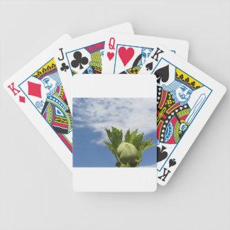 Frische grüne Haselnuss des Singles gegen den Bicycle Spielkarten