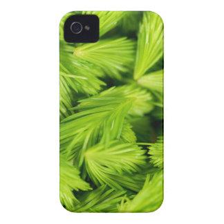 Frische grüne Sprösslinge der gezierten Bäume iPhone 4 Hülle