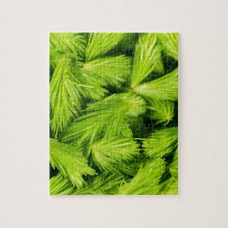 Frische grüne Sprösslinge der gezierten Bäume Puzzle