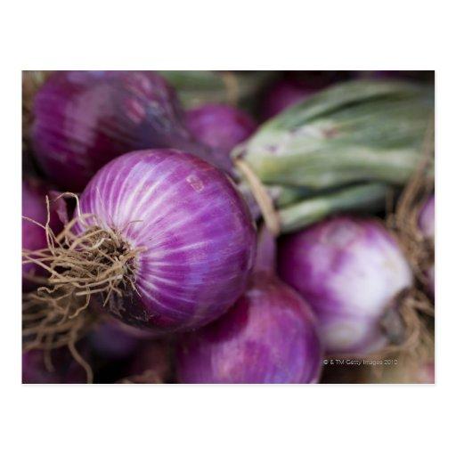 Frische rote Zwiebeln an einem New-Jersey Bauern Postkarte