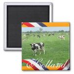 Frisian-Kühe Wiesen-im orange Kühlschrankmagnet-Ge Quadratischer Magnet