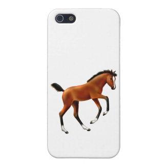 Frisky Bucht-Fohlen iPhone Fall Hülle Fürs iPhone 5